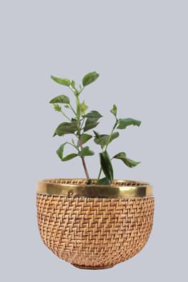 Egg shape planter