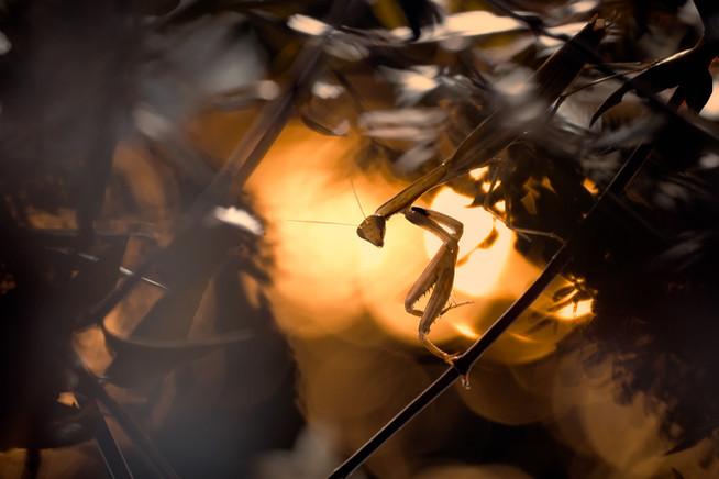 Chasing Lights and Shadows 1xhd.jpg