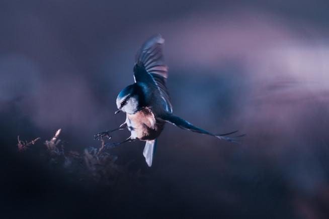 A bird world V 1xhd.jpg