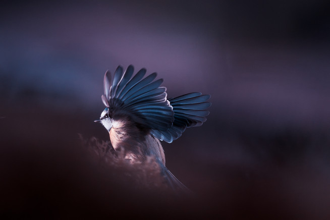 A bird world 2 1xhd.jpg