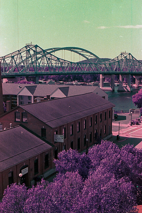 Print Piggys Bridge LomoChrome Purple