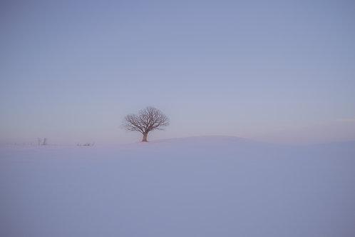 """Winter Tree 12x18"""" Framed"""