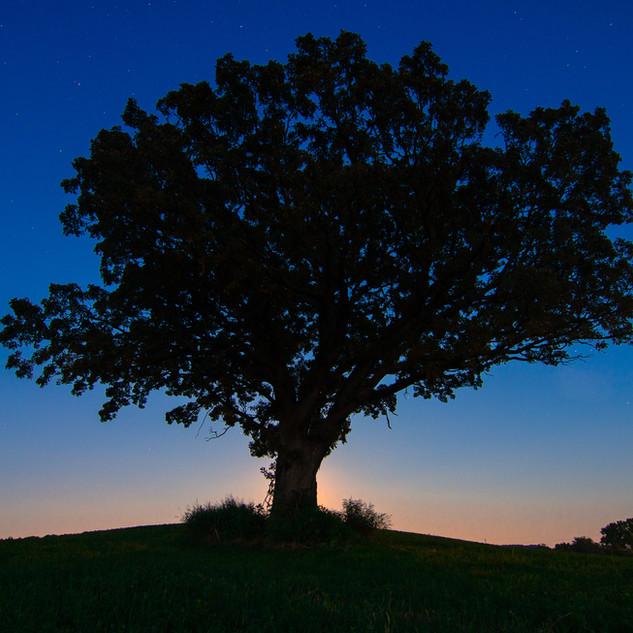 Farm Tree