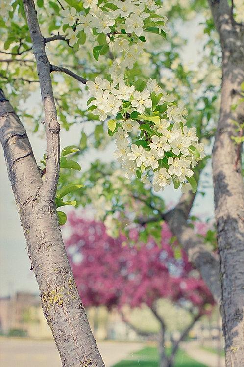"Print ""Spring"""