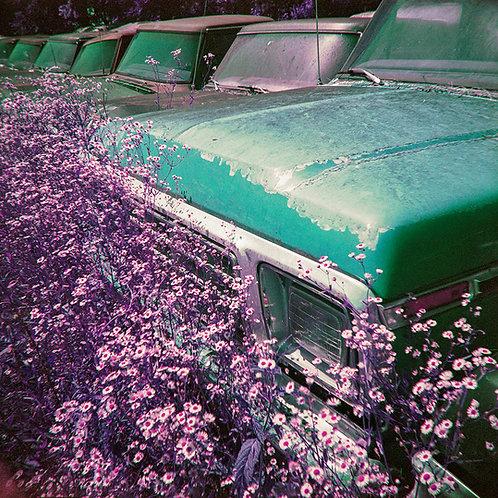 "Print Vintage Trucks 16x16"""