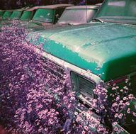 small_Purple Film 1 (12)_DylanOverhouseP