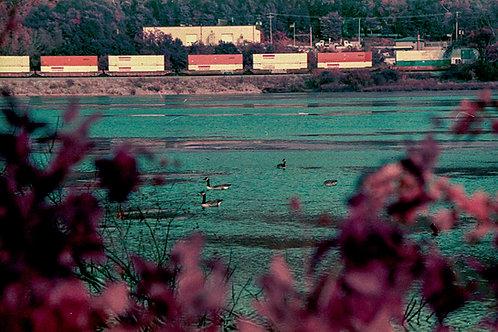 Canvas Myrick Ducks, La Crosse. LomoChrome Purple