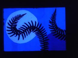 Nocturnal Landscape 11