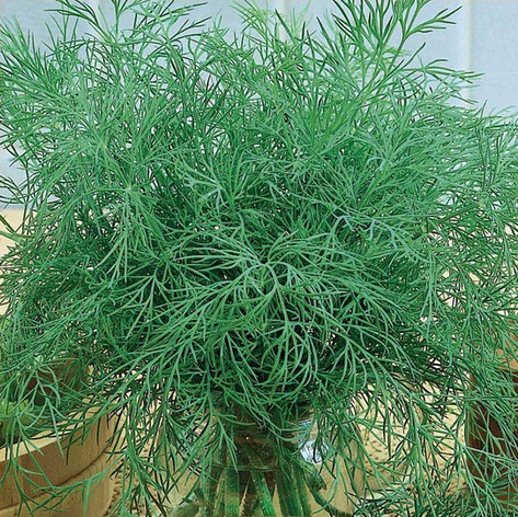 Green Sleeves Dill