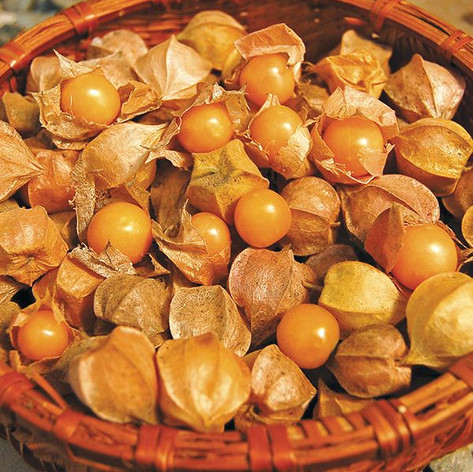 Ground Cherries Goldie