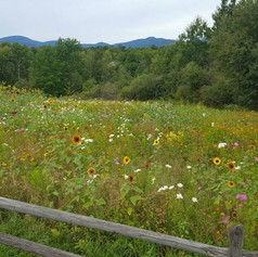 Wildflower Field Vista