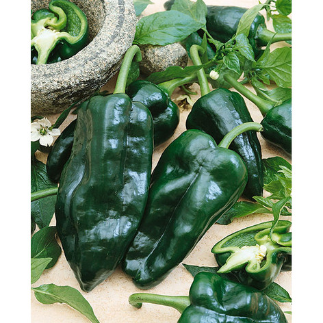 Ancho Poblano Peppers