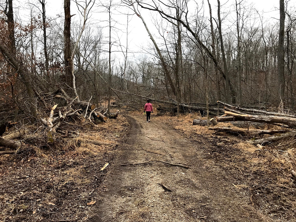 Nathan Bedford Forrest State Park tornado destruction on trail