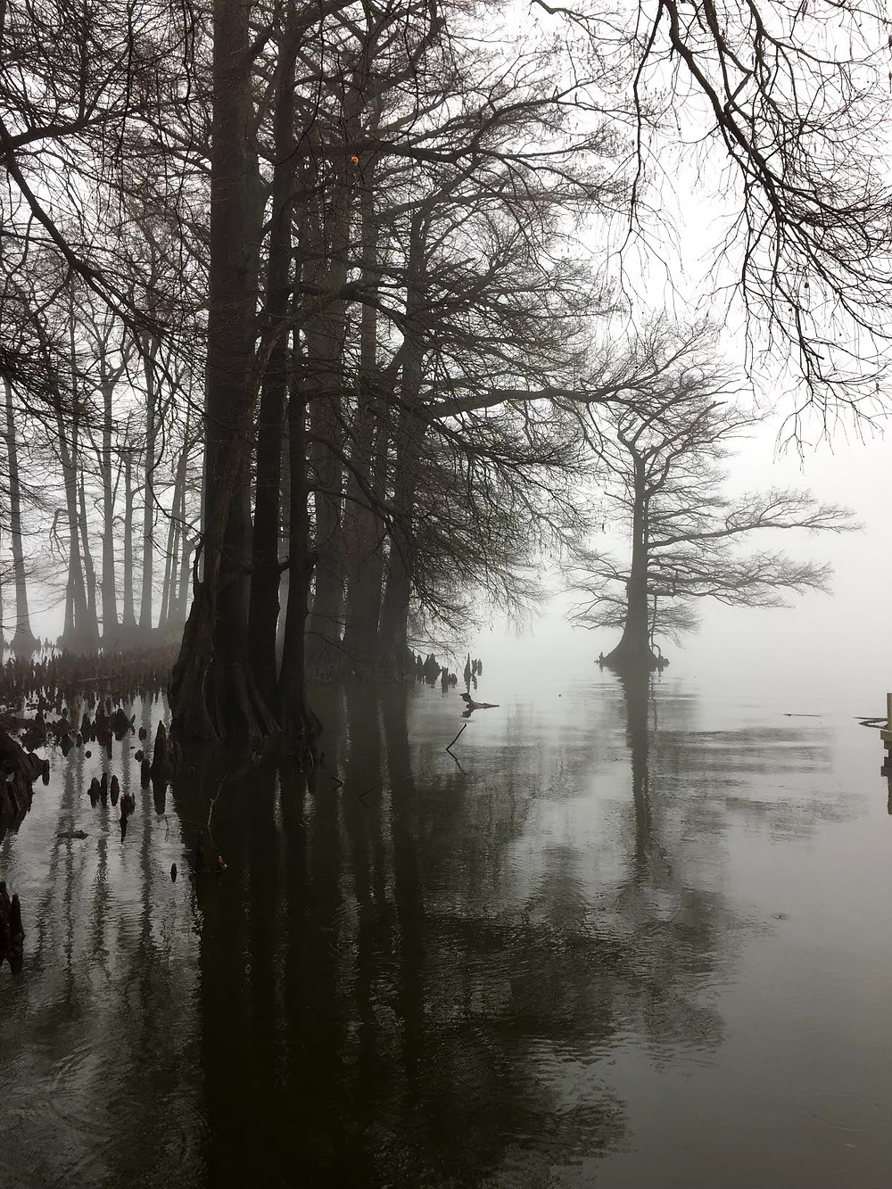 Mist engulfs the Cypress trees on Reelfoot Lake at Reelfoot Lake State Park