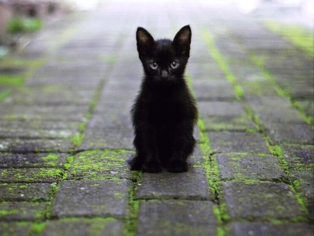 O Gato preto e o azar