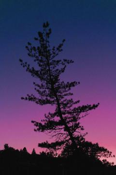 """""""Sophia's Sunset"""""""