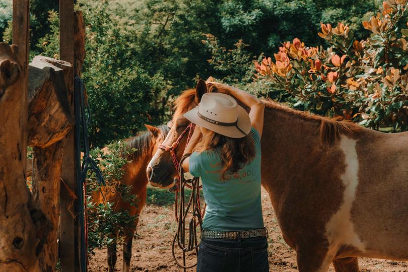 Horse Spirit Healing