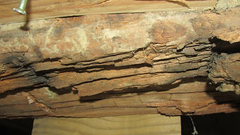 At this Home Inspection in Tullahoma, TN, we found major Termited Damage.  The Termites had caused thousands of dollars worth of Structural damage.