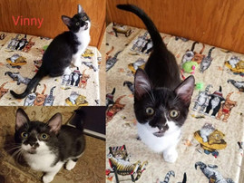 No longer available - FOR ADOPTION 2 MALE ONE FEMALE