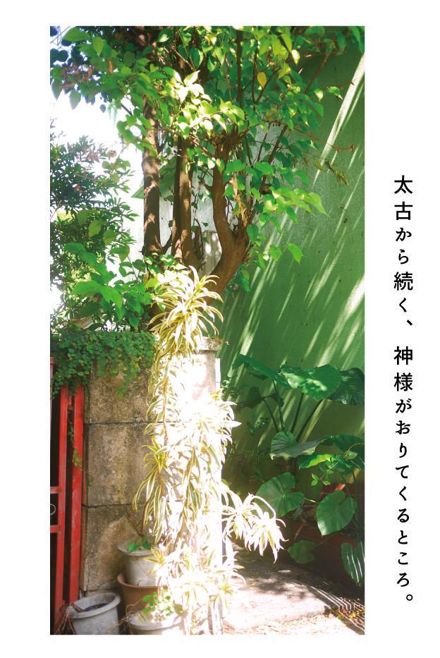 futenma_0511_10.jpg