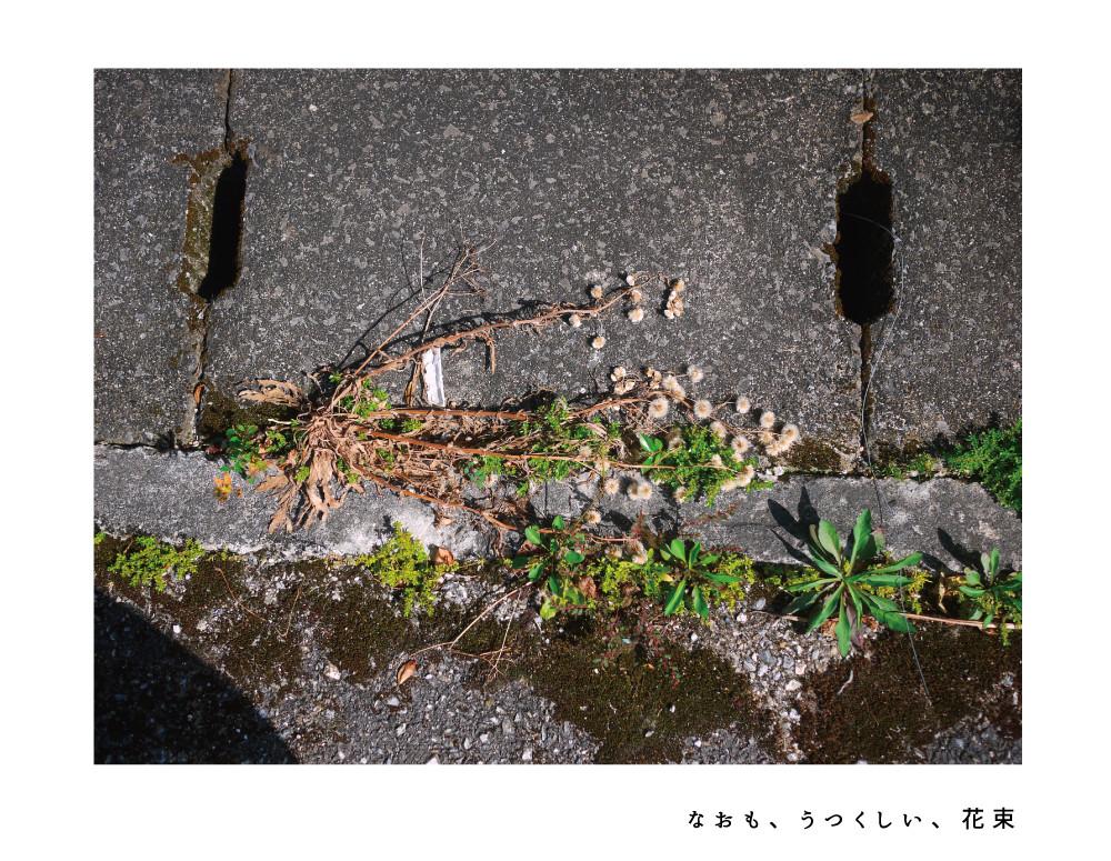 futenma_0511_3.jpg