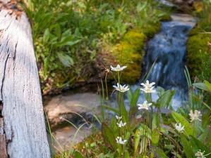 May: Idaho Headwaters: Humble Beginnings