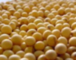 hydrolyzed soy protein.jpg