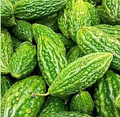 bitter melon.jpg