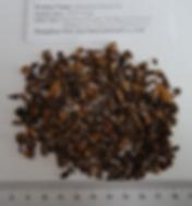DandelionRoot Fried Tea BagCut