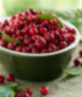 American Cranberry Fruit In Bowl