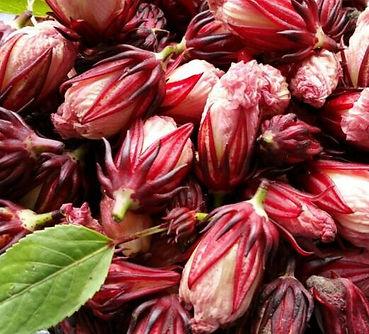 Hibiscus sabdariffa.jpg