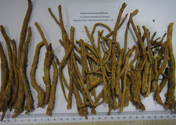 Baikal Skullcap Scutellaria baicalensis Root whole