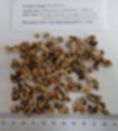 GanodermalucidumReishi Tea BagCut extraction cut