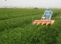 barley grass farm collect Hangzhou New Asia International Co., Ltd