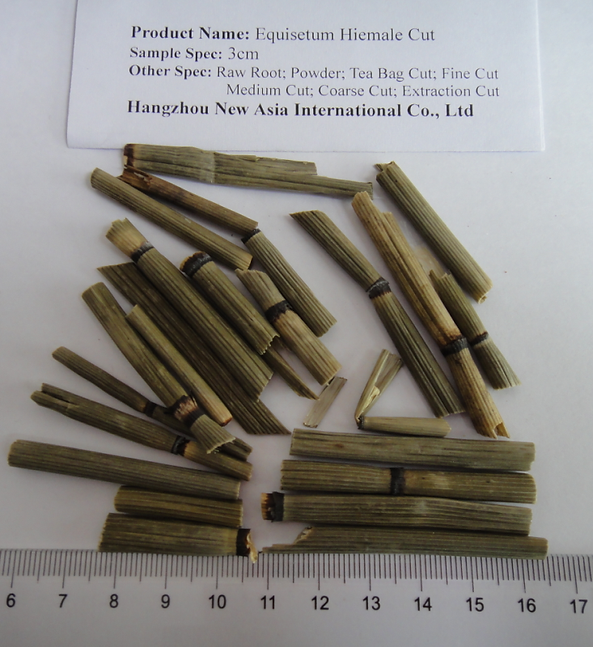 Equisetum Hiemale Tea Bag Cut