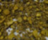 BaikalSkullcapScutellariabaicalensisRoot Tea Bag Cut