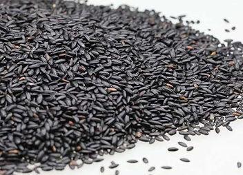 black rice Oryza sativa.jpg