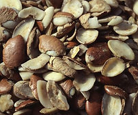 African mango seed.jpg