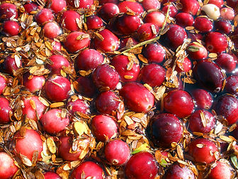 cranberry 5.jpg