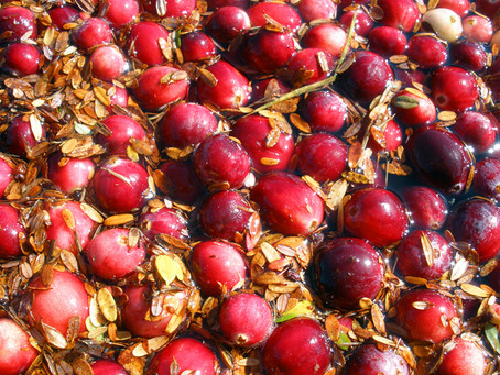 American Cranberry Extract