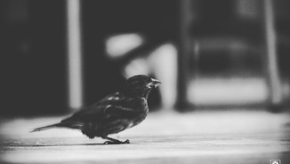 One Legged Bird