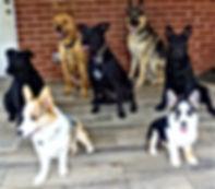Radar, Ryker, Nika, Lucy, Charlie, Sadie