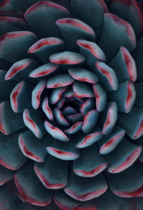 succulent forms.jpg