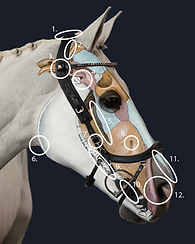 Paard-met-punten.jpg