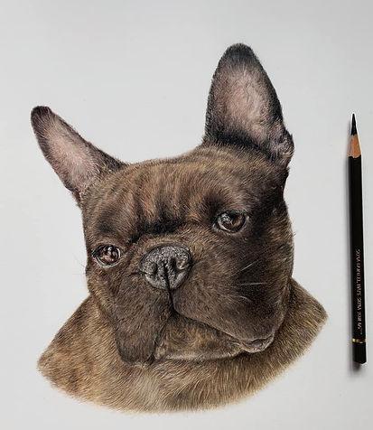 Raymond - French Bulldog Commission