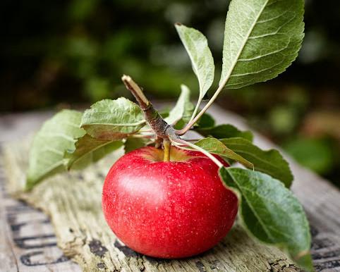 Fruta. Com ou sem casca?