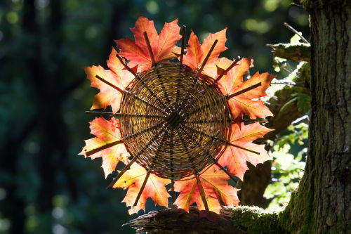 Outono - tempo de soltar e tempo de cuidar