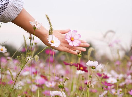 Alergia primaveril? Saiba quais os alimentos e as plantas que o podem ajudar.