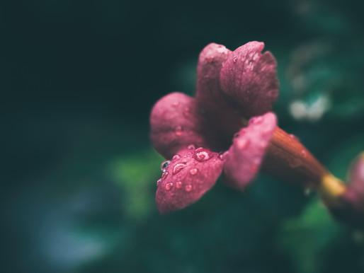 Essências Florais - o que são e como nos ajudam.