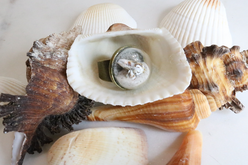 ring, costume jewelry, beach jewelry, fashion accessory, shell jewelry, beach ring, shell ring, women's ring, kids ring,dome